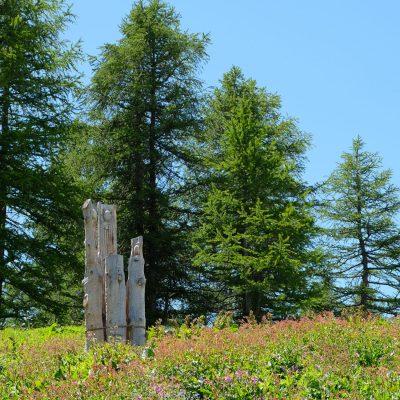 La terre repond aux arbres_Photo Cho